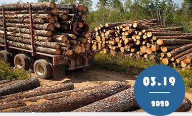 干燥木材如何才能做到防霉防虫效果?